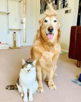 犬用スクラッチャーブラシ スペクトラムブランズジャパン株式会社『ファーミネーター』3