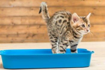 オシッコをする猫